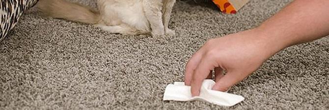 Как убрать запах мочи с ламината в домашних условиях 517