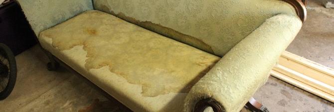 Чем вывести пятно от кошачьей мочи на диване в домашних условиях фото