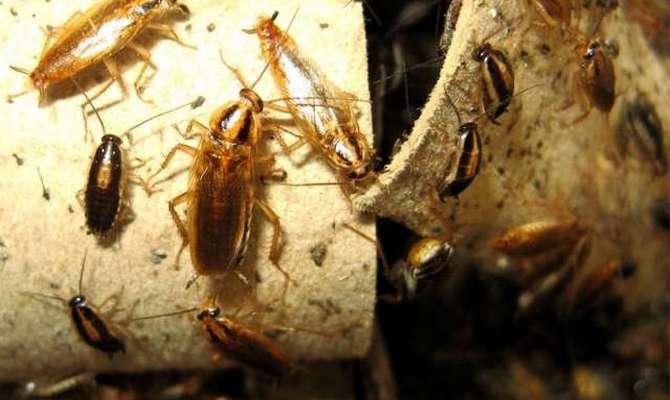 Тараканы около труб в ванной