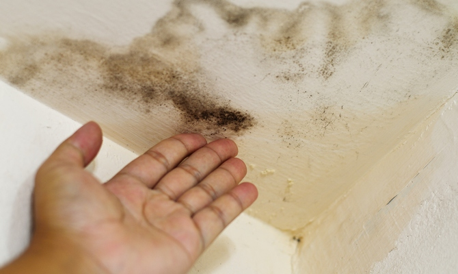 плохой запах изо рта от паразитов