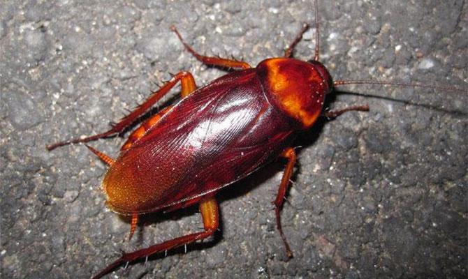 Домашние тараканы и муравьи