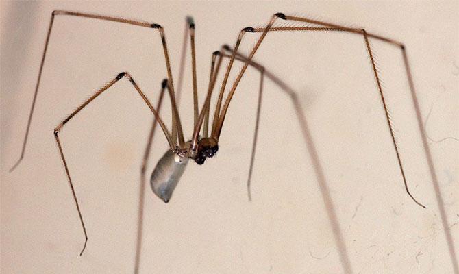 Мухоловки и пауки