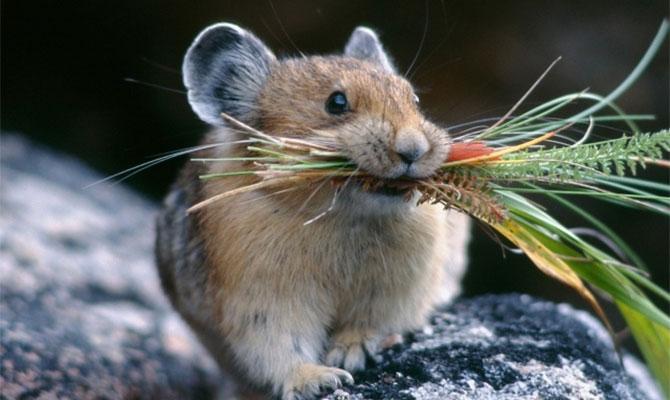 Средства против мышей